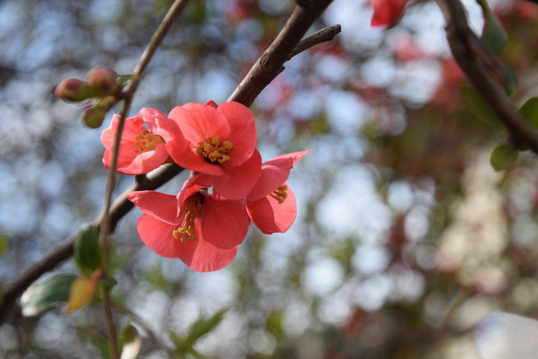 Ayurvedische Detox Kur im Frühling für zu Hause
